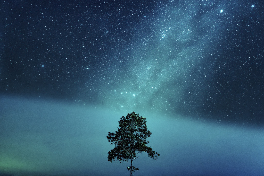 Lone Tree in the Stars