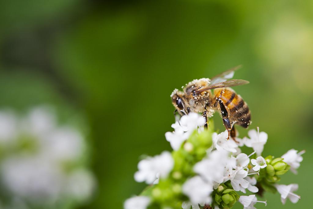 BeeBuffet